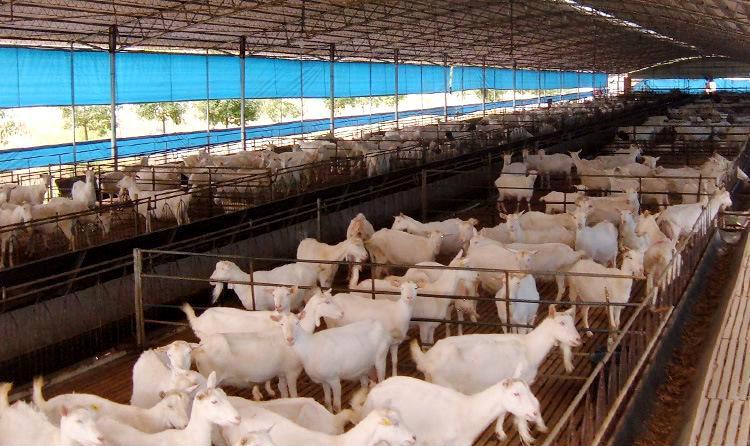 內蒙古壯大飼料有限公司