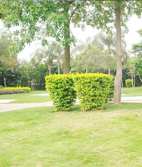 园林绿化工程服务