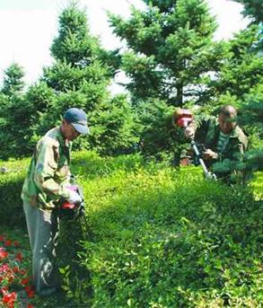 景觀和綠地設施